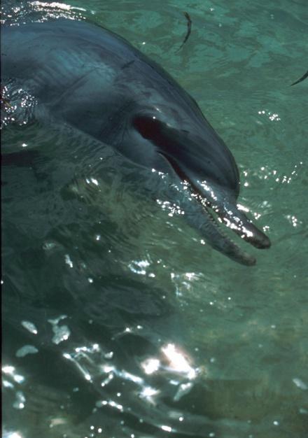 Dolphin4 MMia87