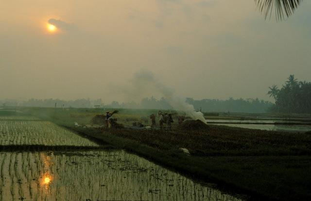 Bali smoke paddy sun 196
