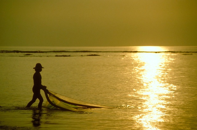 bali-gold-fisher-42