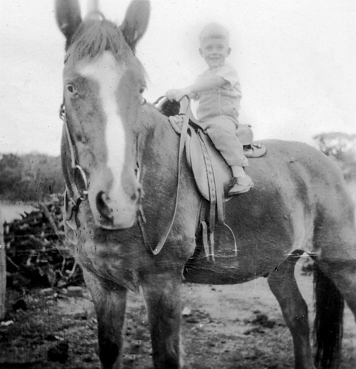 Pete horse 1950